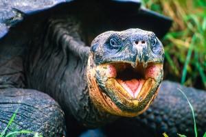 vortrag-ecuador-galapagos-08